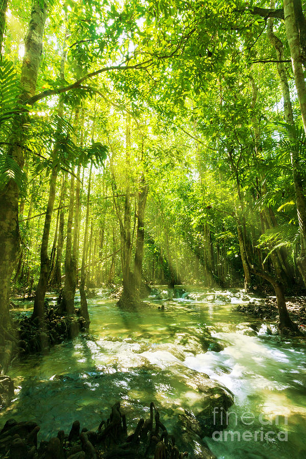 Waterfall In Rainforest Photograph