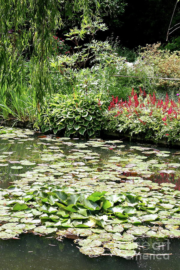Waterlily Pond Giverney Photograph