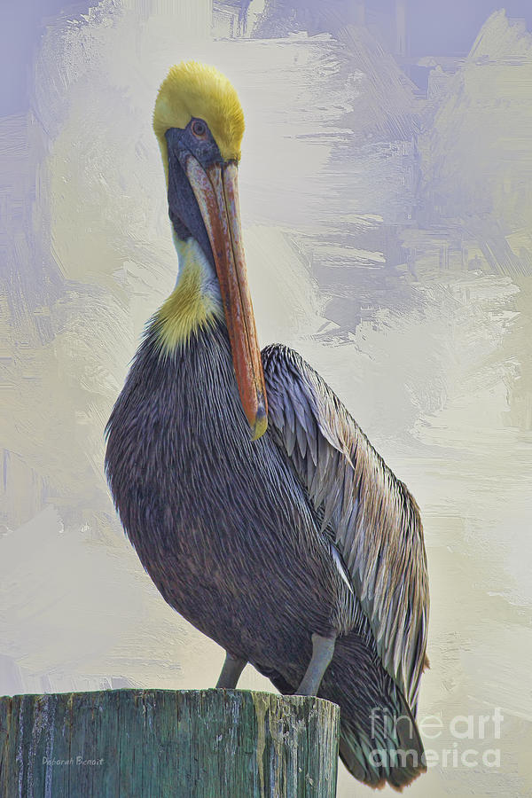 Waterway Pelican Photograph  - Waterway Pelican Fine Art Print