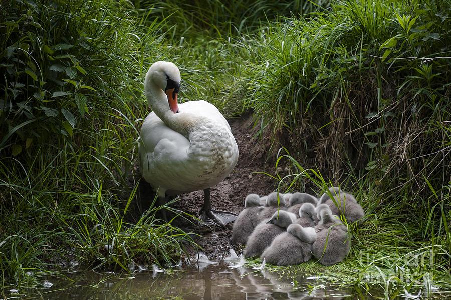 Baby Photograph - We All Here Mum by Svetlana Sewell
