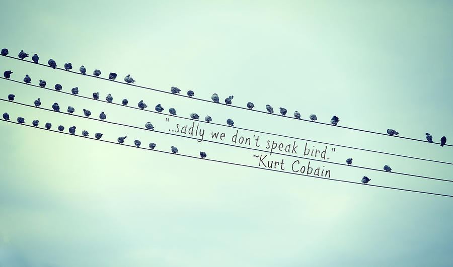 We Dont Speak Bird Photograph  - We Dont Speak Bird Fine Art Print