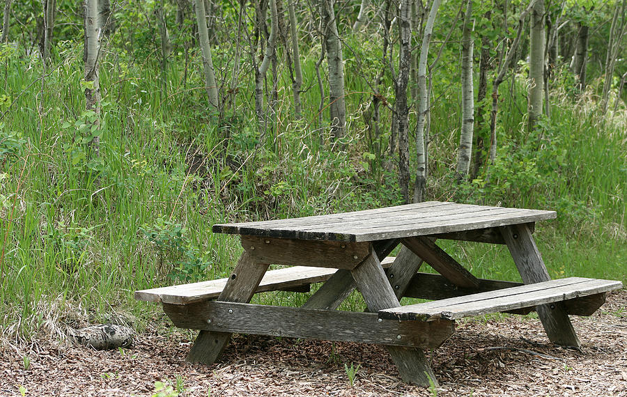 Picnic Table Photograph - Weathered Picnic Table In A Forest by Robert ...