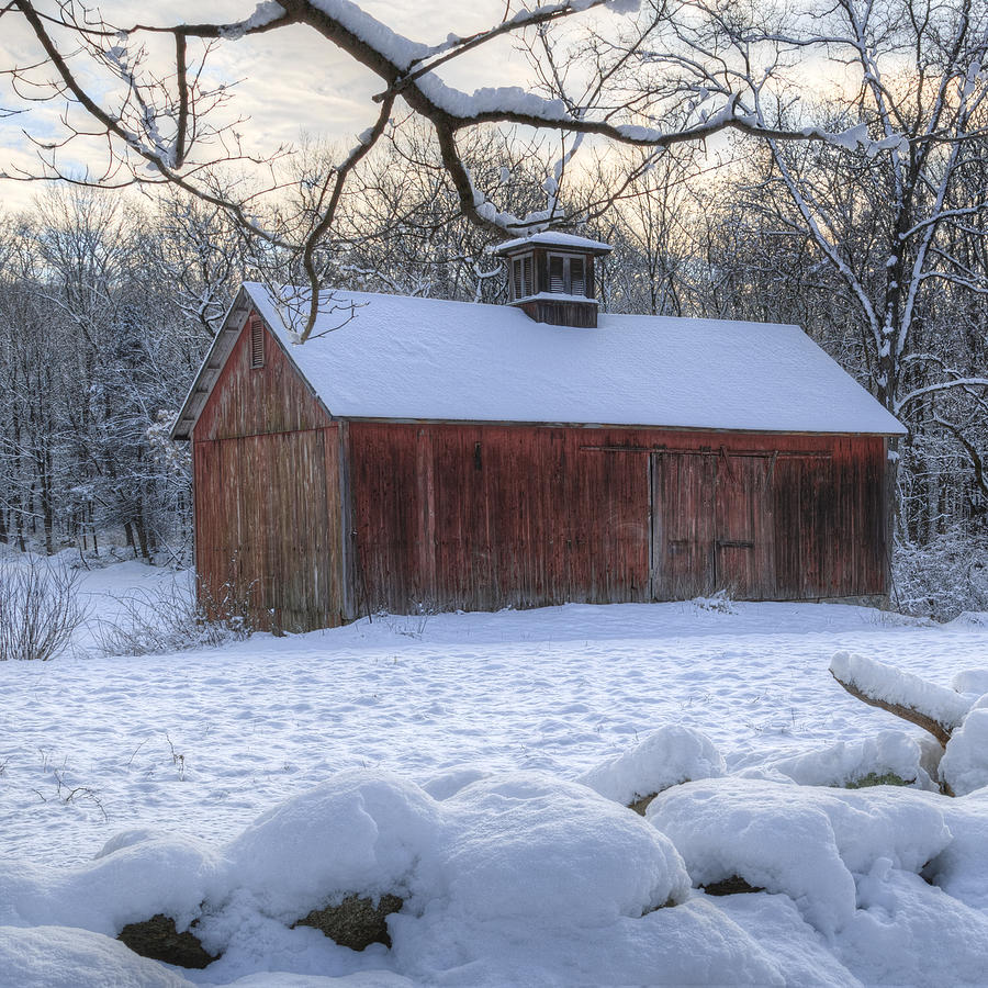 Weathering Winter Square Photograph  - Weathering Winter Square Fine Art Print