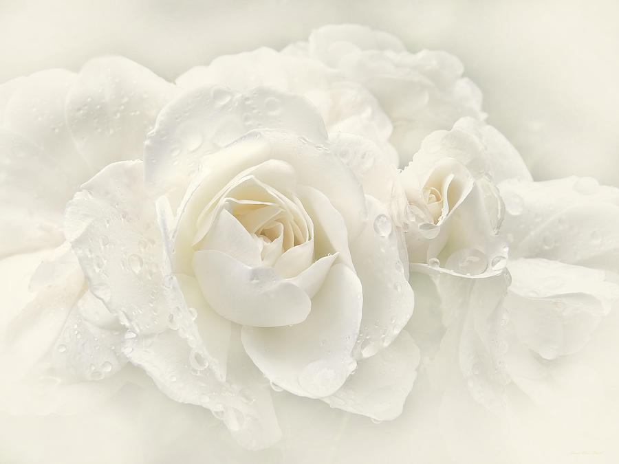 Wedding Day White Roses Photograph