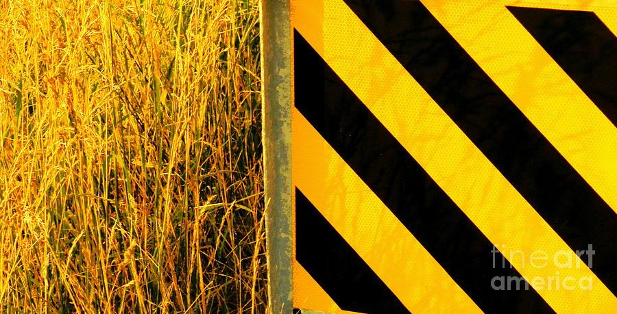 Horizontal Yellow And Black Stripedabstract Print Photograph - Weeds Versus Man by Joe Jake Pratt