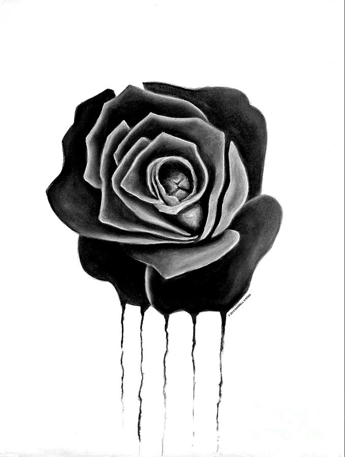 Weeping Black Rose Drawing