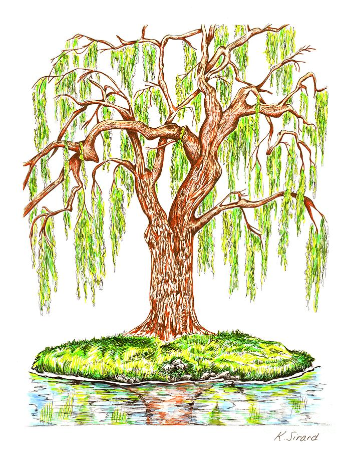 Weeping Willow Drawing