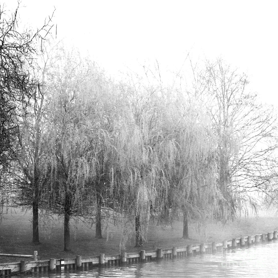 Weeping Willows By The Lake Photograph