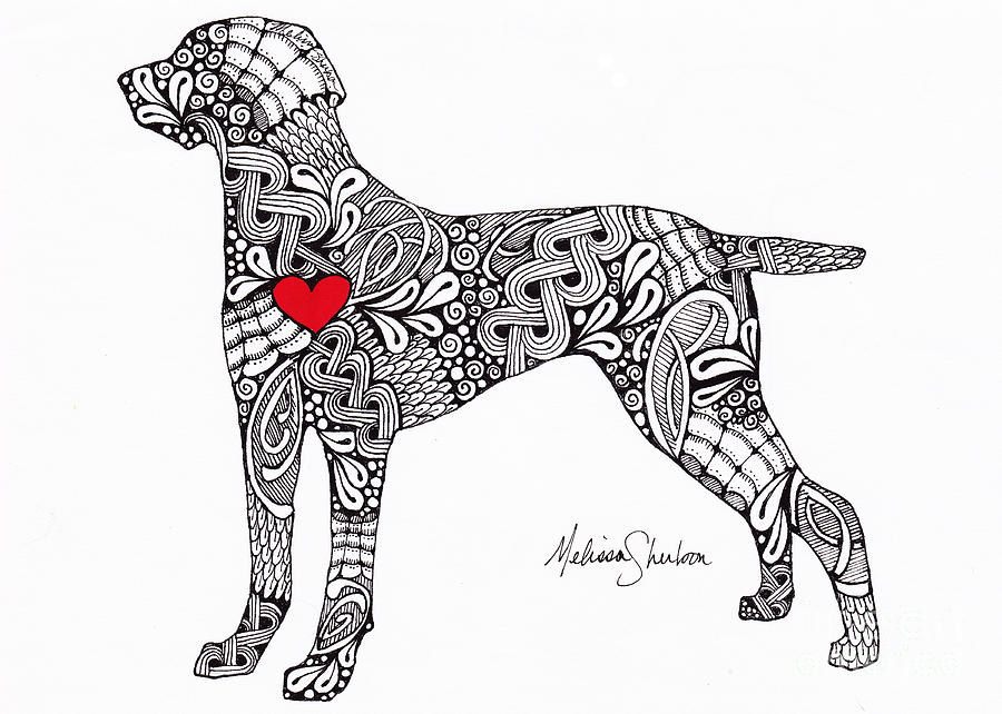 weimaraner coloring pages weimaraner drawing by melissa sherbon