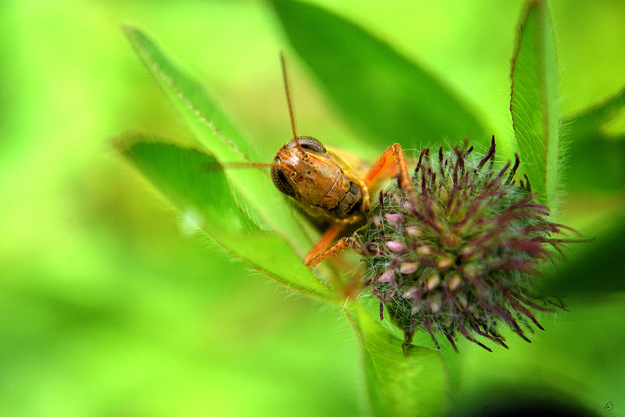 Grasshopper Photograph - Welcome To My Lair by Emily Stauring