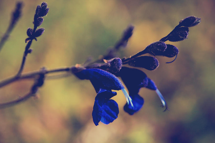Berkeley Botanical Gardens Photograph - Were Two Of A Kind by Laurie Search
