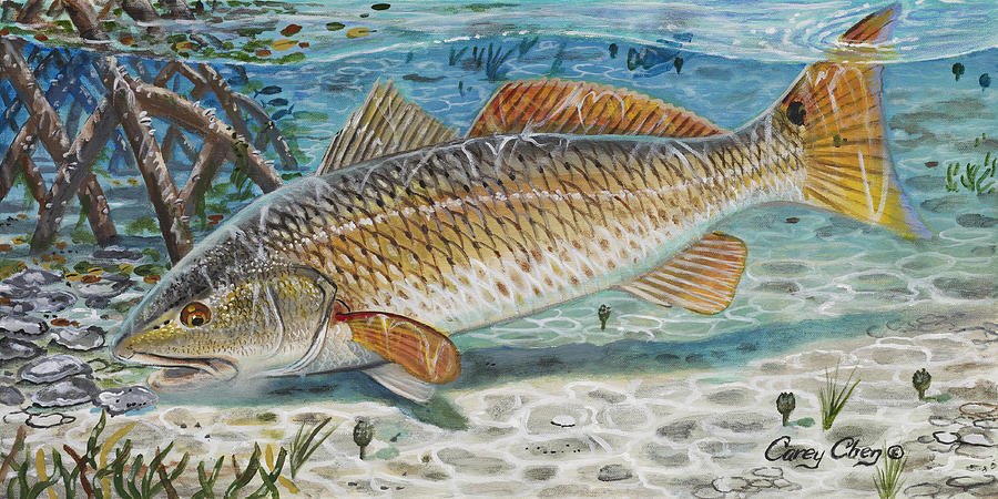 Redfish Painting - West Coast Red by Carey Chen