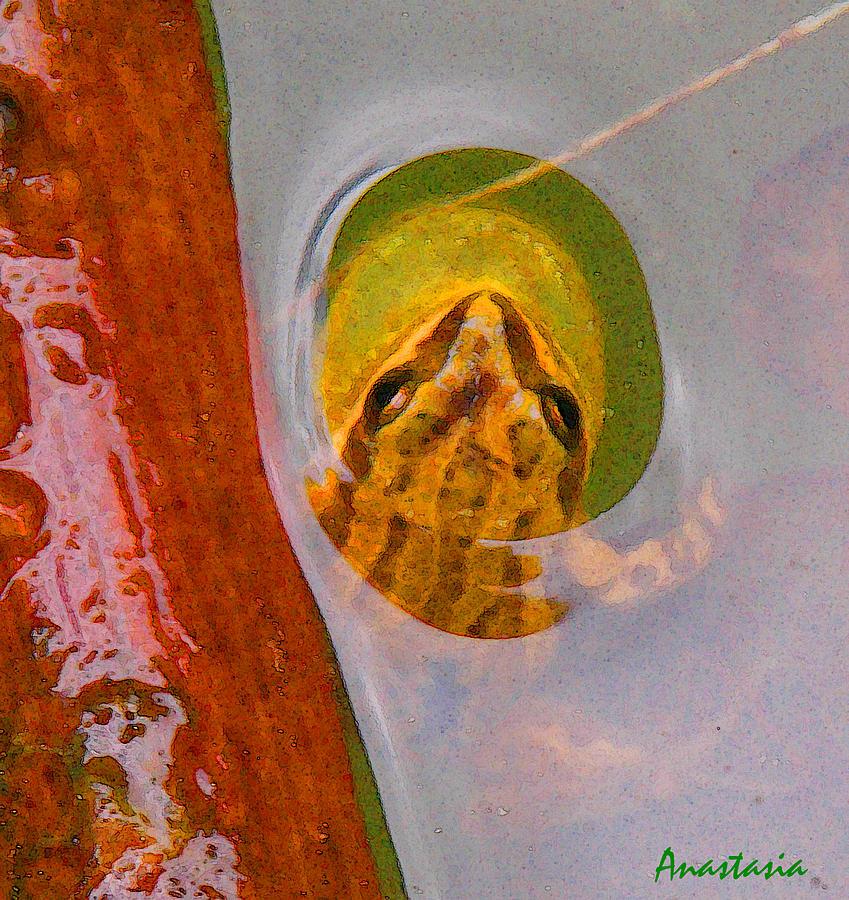 Western Chorus Frog Photograph - Western Chorus Frog I by Anastasia Savage Ealy