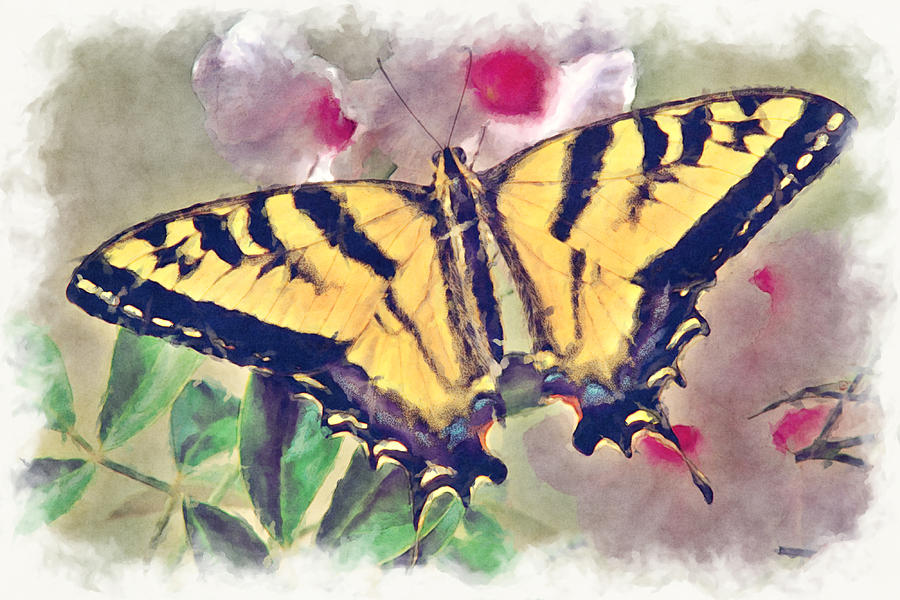 Western Tiger Swallowtail Papilio On Flower Photograph  - Western Tiger Swallowtail Papilio On Flower Fine Art Print