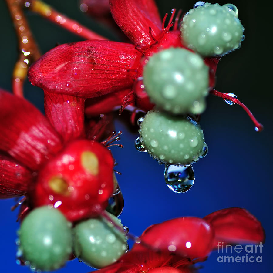 Photography Photograph - Wet Berries by Kaye Menner