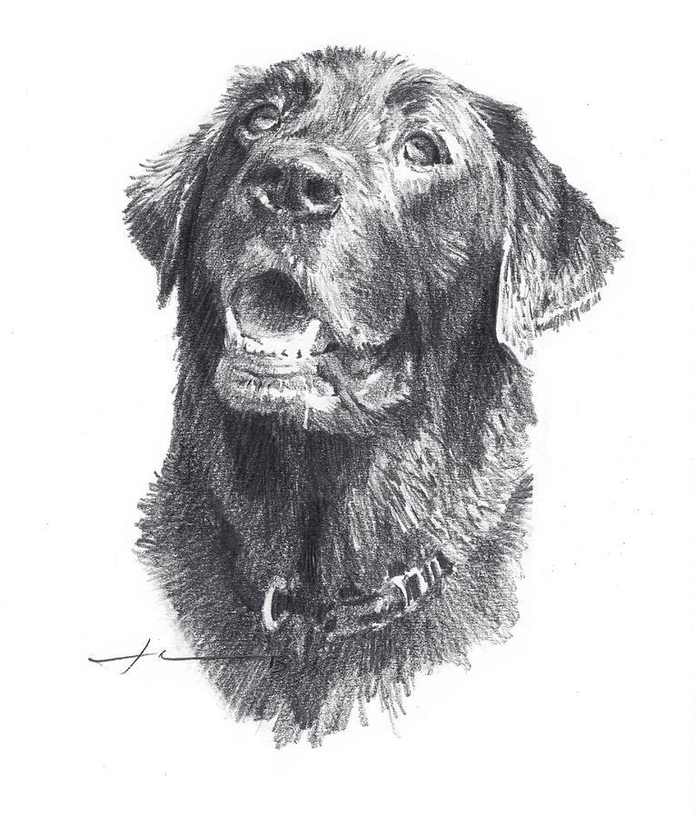 Cartoon Labrador Dog Images Stock Photos amp Vectors
