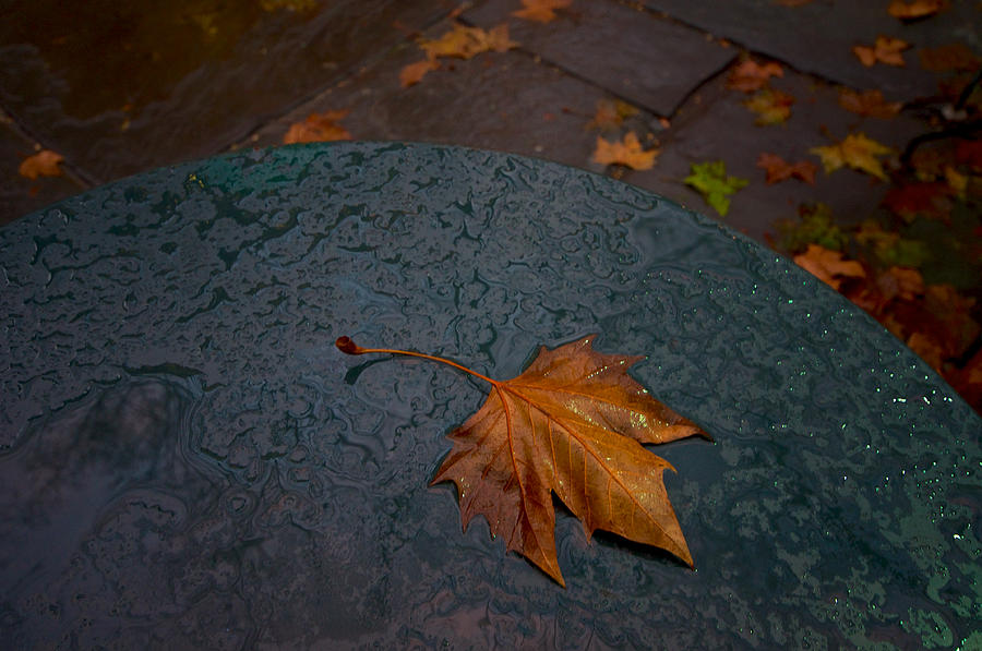 Wet Leaf Photograph