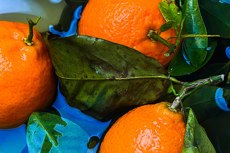 Wet Tangerines Photograph