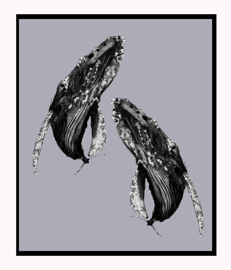 Whale Pair Painting