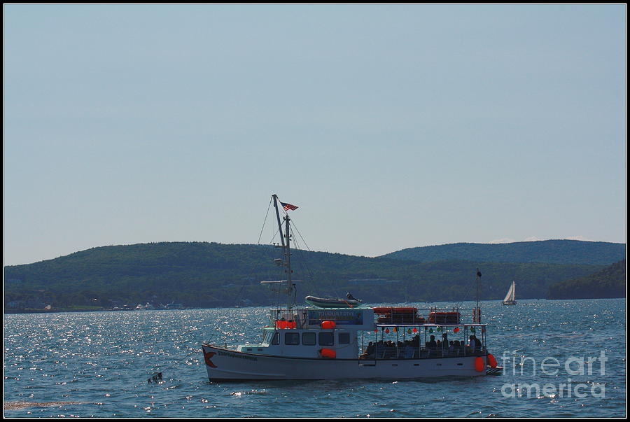 Whale Watching At Bar Harbor Photograph  - Whale Watching At Bar Harbor Fine Art Print