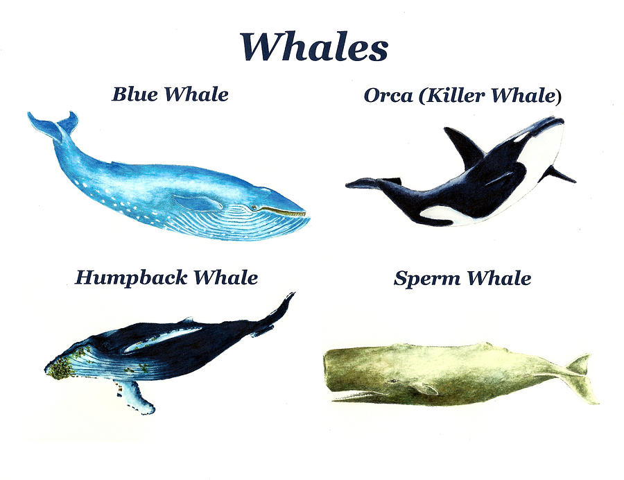 Whales Painting