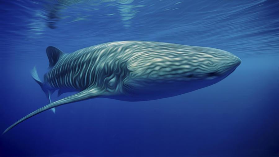 Whaleshark  Painting