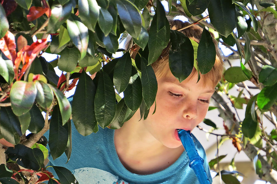Portrait Photograph - What Boys Are Made Of - Trees And Music by Ella Kaye Dickey
