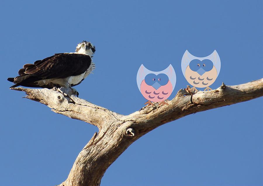 Osprey Photograph - What? by Rosalie Scanlon