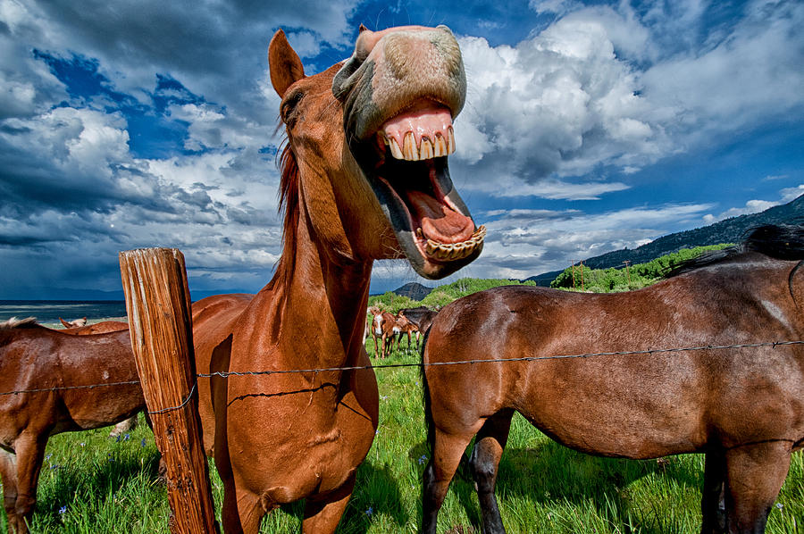 Whats So Funny Photograph  - Whats So Funny Fine Art Print