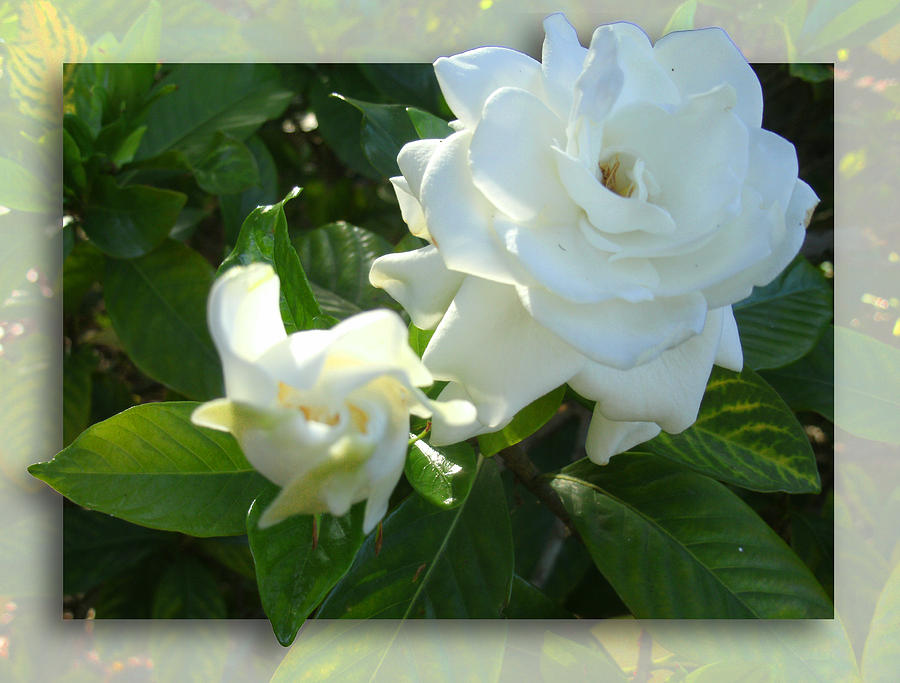 Whats So Special About White Flowers Photograph