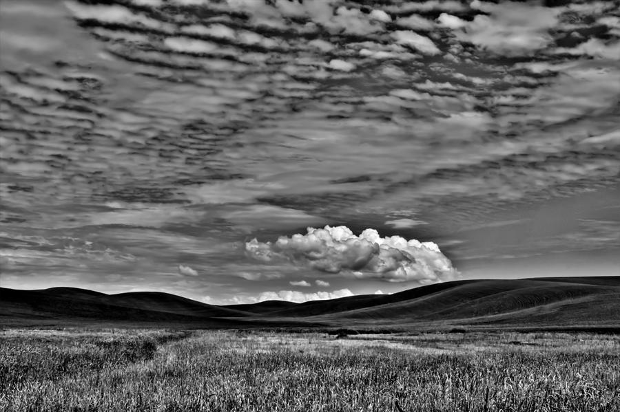 Wheat Fields In The Palouse Photograph
