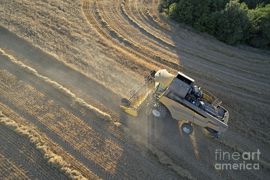 Wheat Harvest In Provence Photograph  - Wheat Harvest In Provence Fine Art Print