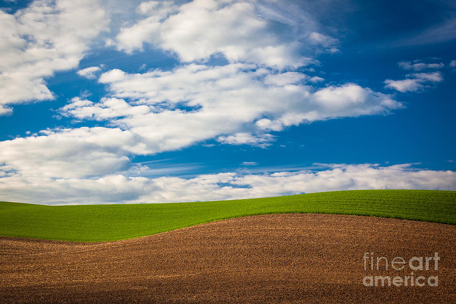 America Photograph - Wheat Wave by Inge Johnsson