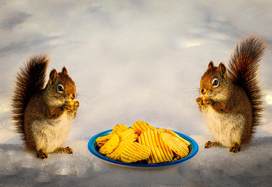 When You Lose Your Nuts There Is Always Chips Photograph  - When You Lose Your Nuts There Is Always Chips Fine Art Print