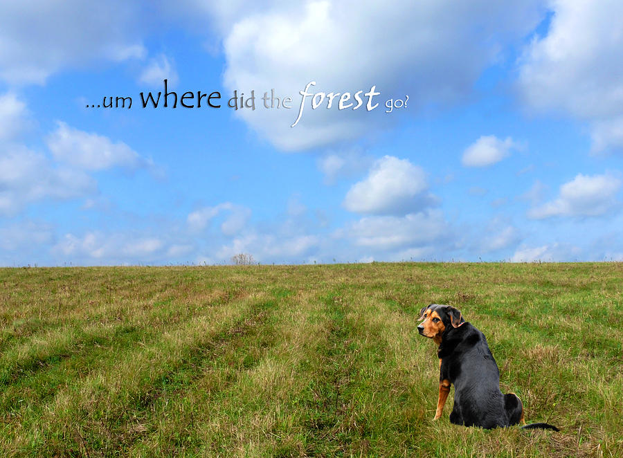 Where Did The Forest Go Photograph  - Where Did The Forest Go Fine Art Print