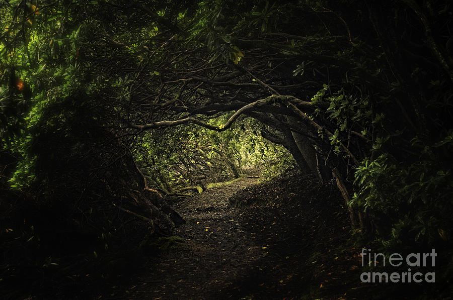 Where Fairies Dwell Photograph  - Where Fairies Dwell Fine Art Print