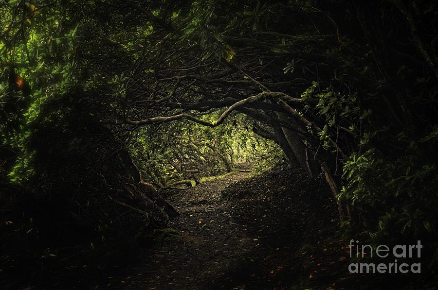 Where Fairies Dwell Photograph