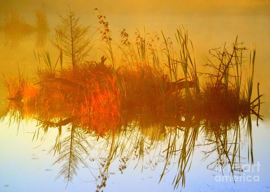 Dream Weaver Photograph