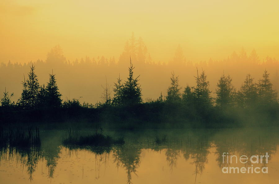 Where The Moose Sleep  Photograph  - Where The Moose Sleep  Fine Art Print
