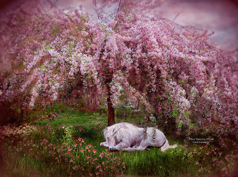 Unicorn Mixed Media - Where Unicorns Dream by Carol Cavalaris