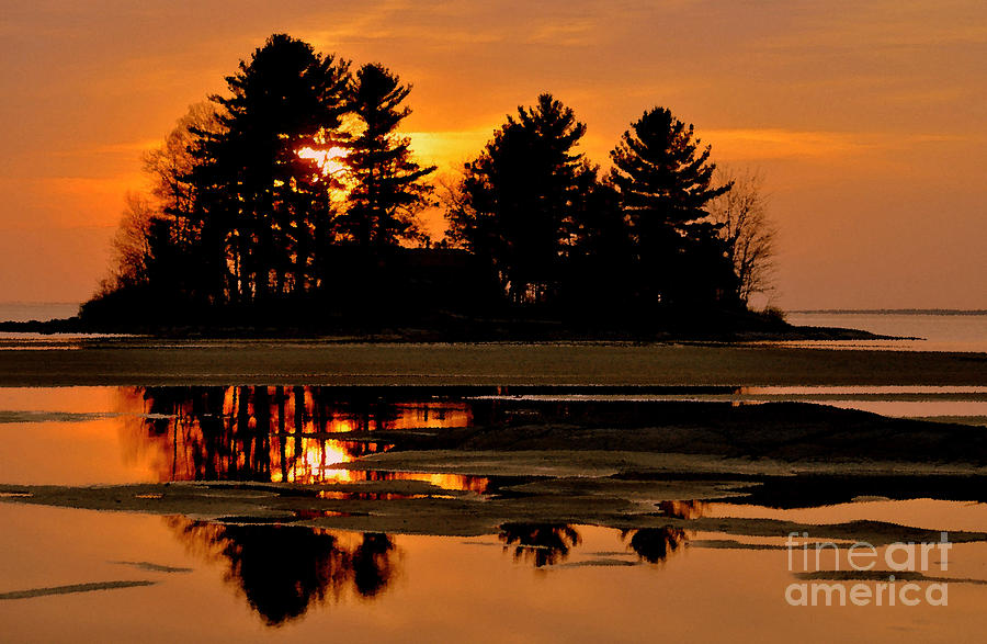 Whispering Pines Photograph