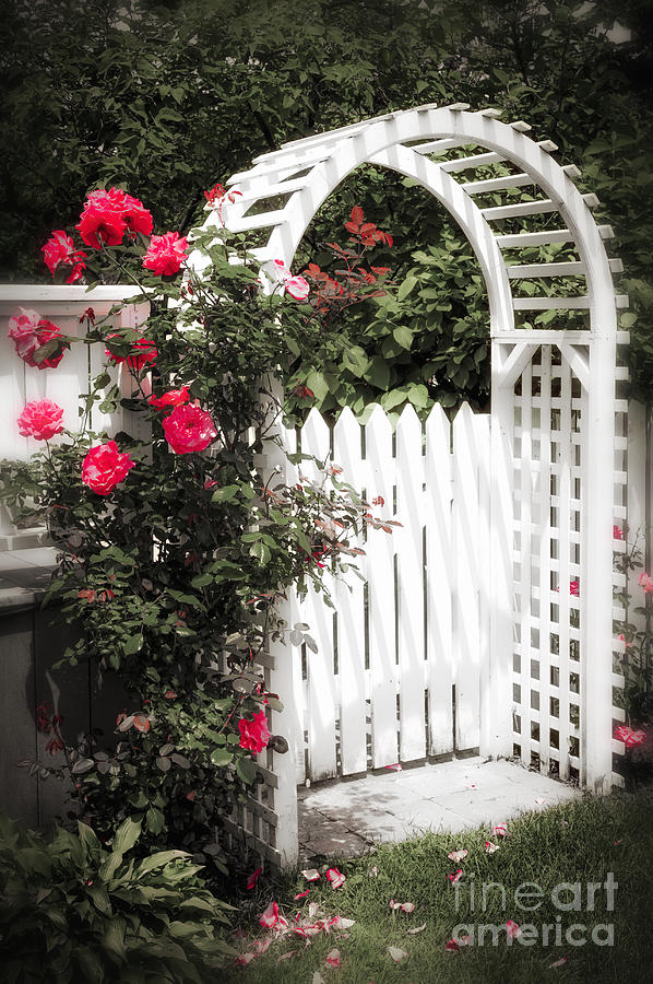 White Arbor With Red Roses Photograph  - White Arbor With Red Roses Fine Art Print
