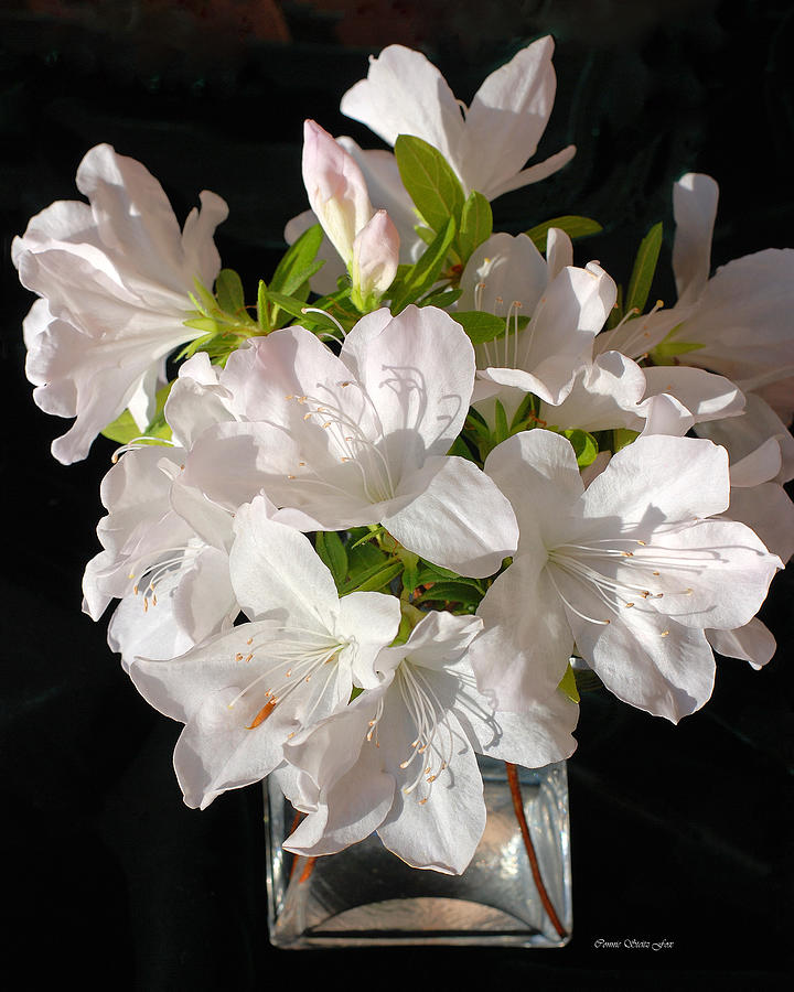 White Azalea Bouquet In Glass Vase Photograph