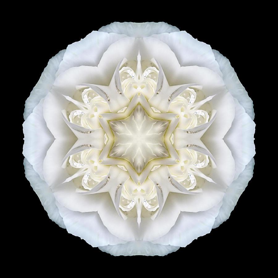 White Begonia II Flower Mandala Photograph