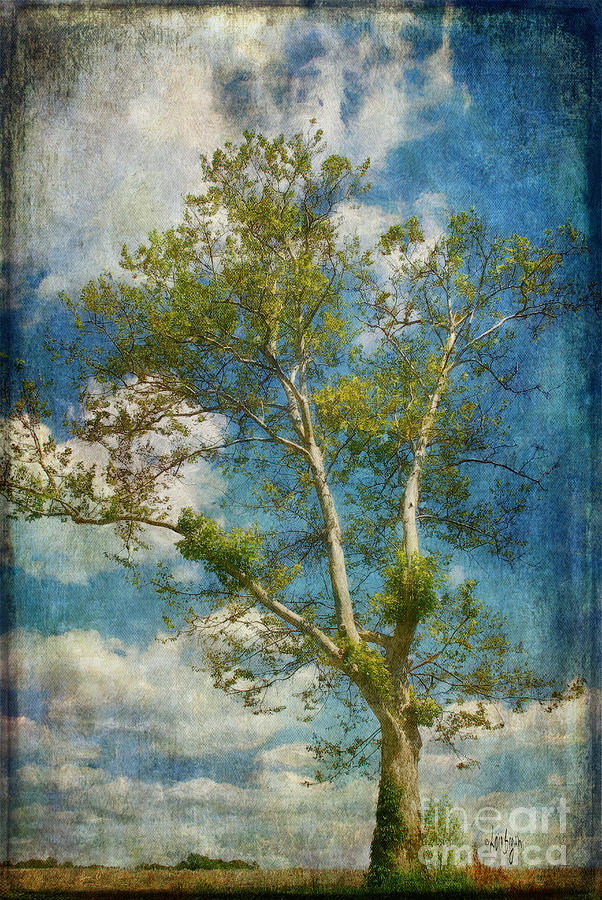 Tree Photograph - White Birch In May by Lois Bryan