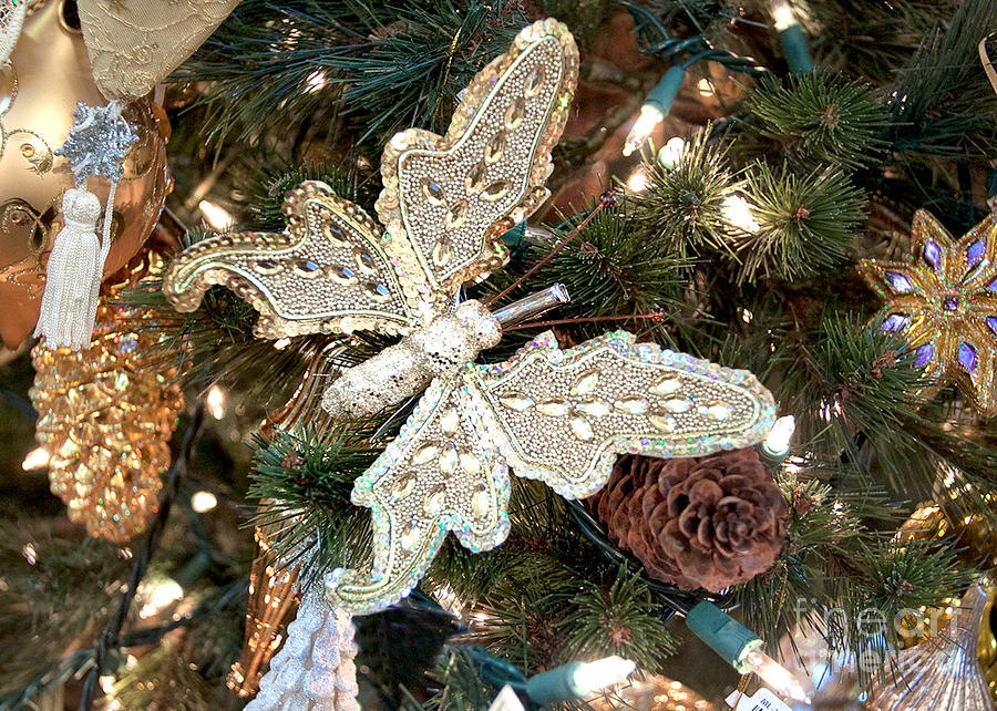 butterfly christmas - DriverLayer Search Engine