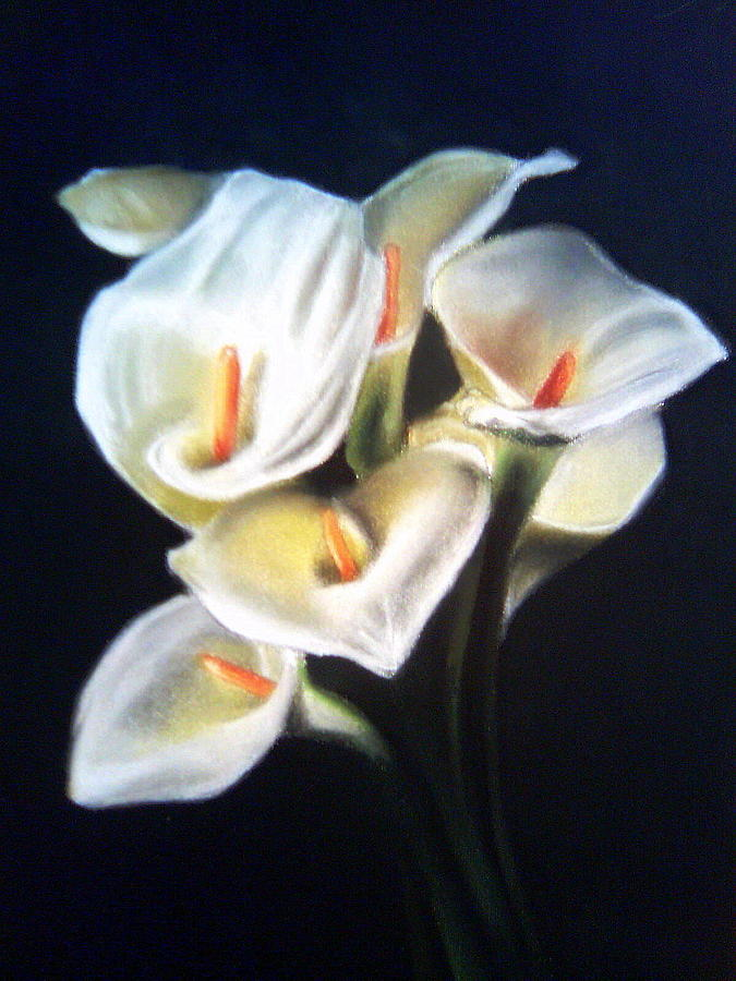 White Calla Lilies Painting by Mojgan Jafari