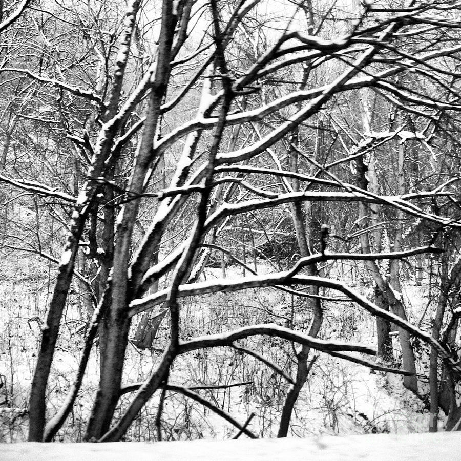 White Christmas 2012 Photograph  - White Christmas 2012 Fine Art Print