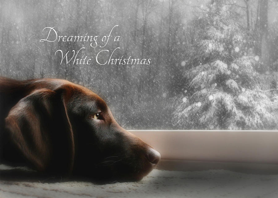 White Christmas Photograph