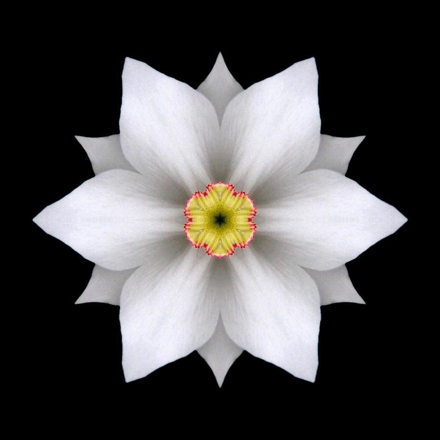 White Daffodil II Flower Mandala Photograph